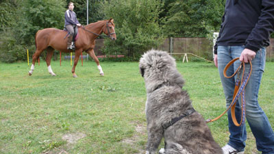 Aktivurlaub mit Hund