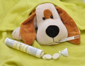 Hunde Krankheiten