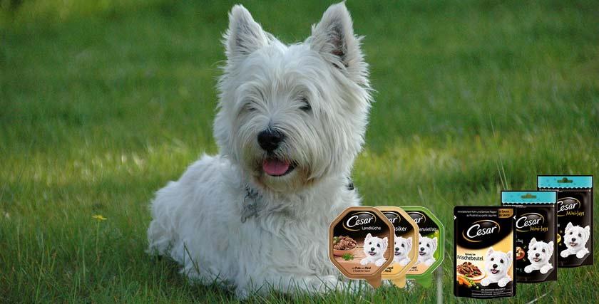 Cesar Hund aus der Werbung